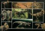 3D kaart verschillende dinosaurussen