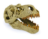T-rex schedel