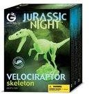 Velociraptor skelet
