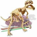 Dinoskelet T-REX uitgraven _