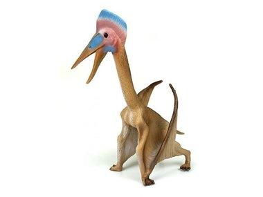 Hatzegopteryx (collecta)