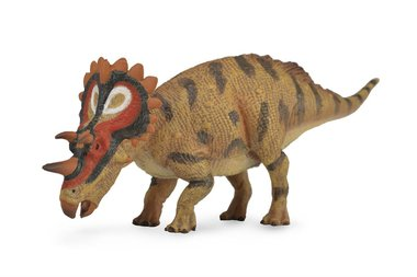 Regaliceratops (collecta)
