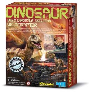 Dinoskelet Velociraptor uitgraven