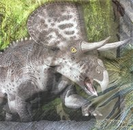 Servet triceratops